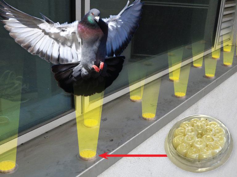 Bird-Free-Optical-Fire-Gel
